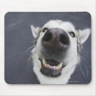 Close-up of husky's nose mouse pad