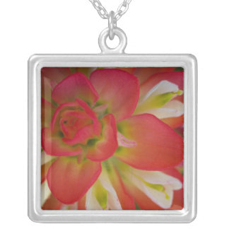 Close-up of Indian Paint Brush near Gay Hill, Square Pendant Necklace