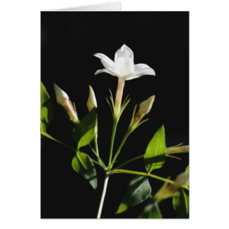 Close Up Of Jasminum Officinale Card