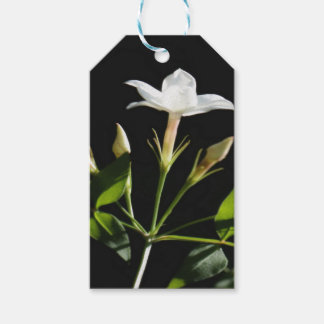 Close Up Of Jasminum Officinale Gift Tags