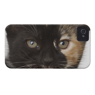 Close up of kitten iPhone 4 Case-Mate case