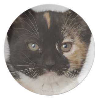 Close up of kitten melamine plate