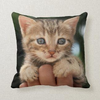 Close Up Of Kitten Throw Pillow