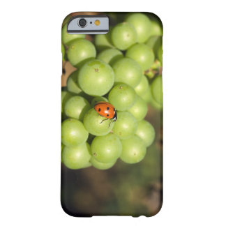 Close up of lady bug on green Pinot Noir grapes Barely There iPhone 6 Case