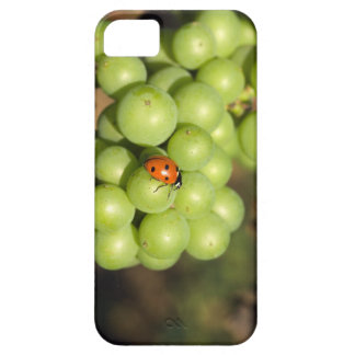 Close up of lady bug on green Pinot Noir grapes iPhone 5 Cases