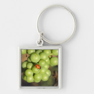 Close up of lady bug on green Pinot Noir grapes Keychain