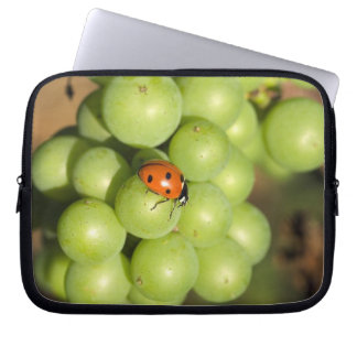 Close up of lady bug on green Pinot Noir grapes Laptop Sleeves