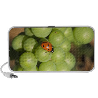 Close up of lady bug on green Pinot Noir grapes Mini Speaker