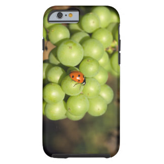 Close up of lady bug on green Pinot Noir grapes Tough iPhone 6 Case