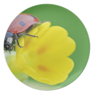 Close-Up of Ladybug Melamine Plate