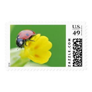 Close-Up of Ladybug Postage
