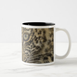 Close up of Leopard, Greater Kruger National 2 Two-Tone Coffee Mug