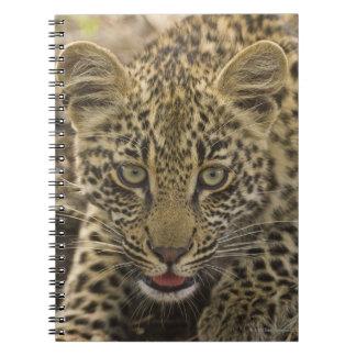Close up of Leopard, Greater Kruger National 2 Spiral Notebook