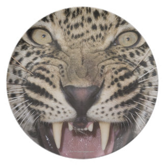 Close up of leopard growling melamine plate