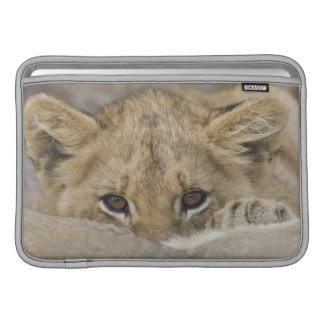 Close up of lion cub's face MacBook sleeve