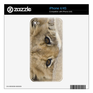 Close up of lion cub's face iPhone 4 decal