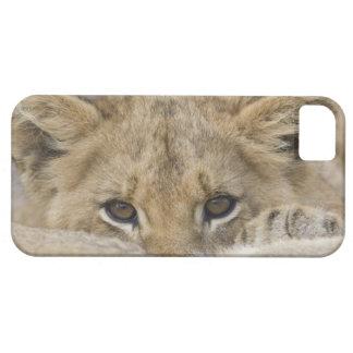 Close up of lion cub's face iPhone SE/5/5s case
