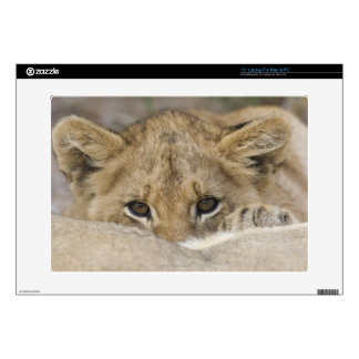 """Close up of lion cub's face decal for 15"""" laptop"""