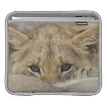 Close up of lion cub's face sleeve for iPads