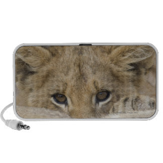 Close up of lion cub's face iPod speaker