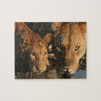 Close up of Lioness (Panthera leo) and cub Jigsaw Puzzle