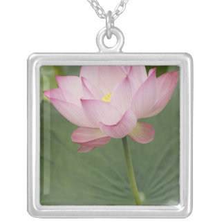 Close up of Lotus flower, Nelumbo nucifera), Silver Plated Necklace