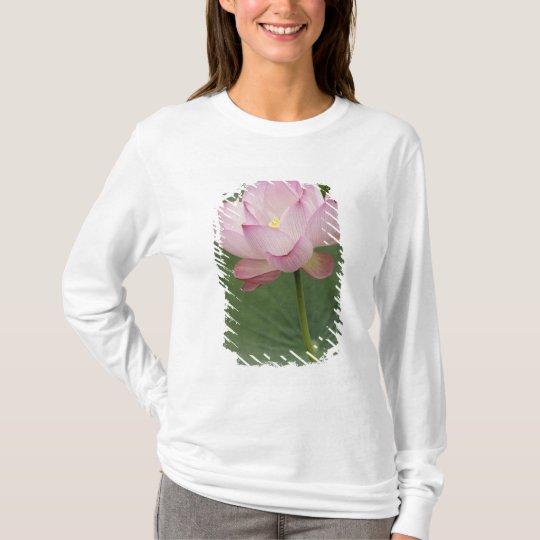 Close up of Lotus flower, Nelumbo nucifera), T-Shirt