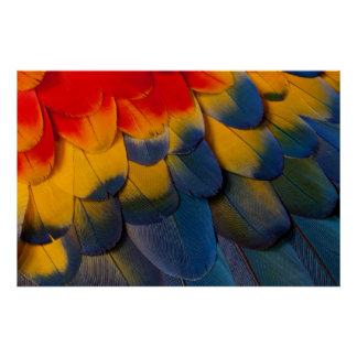 Close Up Of Macaw Feathers Poster