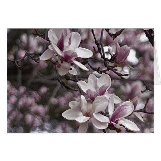 Close Up of Magnolia Tree Card