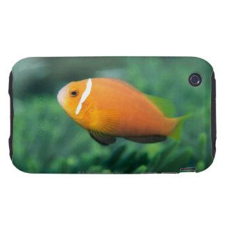 Close up of Maldives anemone fish, Maldives 2 iPhone 3 Tough Case