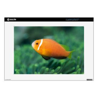 "Close up of Maldives anemone fish, Maldives 2 Skin For 15"" Laptop"