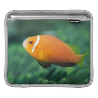 Close up of Maldives anemone fish, Maldives 2 Sleeve For iPads