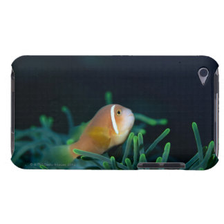 Close up of Maldives anemone fish, Maldives Barely There iPod Case
