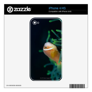Close up of Maldives anemone fish, Maldives Decals For iPhone 4S