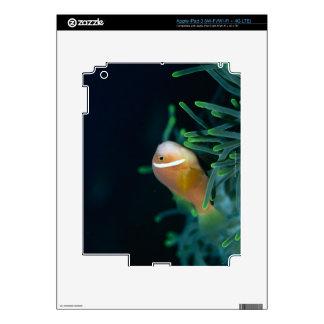 Close up of Maldives anemone fish, Maldives iPad 3 Skin
