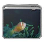 Close up of Maldives anemone fish, Maldives iPad Sleeves