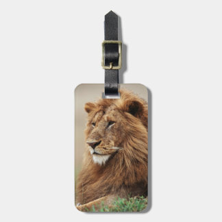 Close-up of male Lion Bag Tags