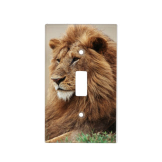 Close-up of male Lion Light Switch Cover