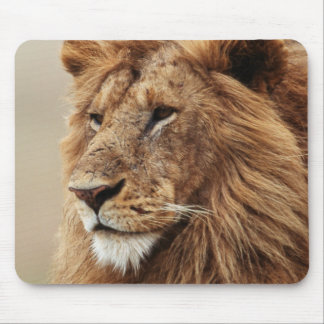 Close-up of male Lion Mouse Pad