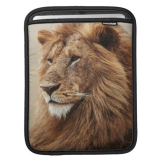 Close-up of male Lion Sleeves For iPads