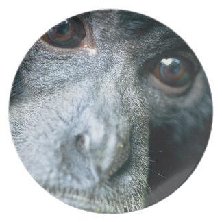 Close-up of monkey melamine plate