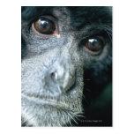 Close-up of monkey postcards