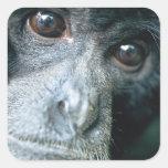 Close-up of monkey sticker