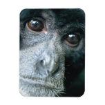 Close-up of monkey vinyl magnet