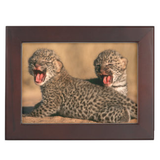 Close-Up Of New Born Leopard (Panthera Pardus) Keepsake Boxes
