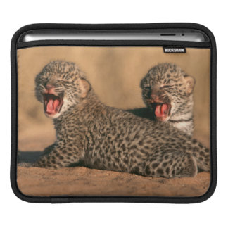 Close-Up Of New Born Leopard (Panthera Pardus) Sleeve For iPads