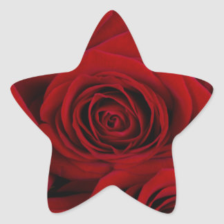 CLOSE UP OF of roses Star Sticker