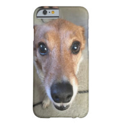 Close up of our rescue dog Ginger Barely There iPhone 6 Case
