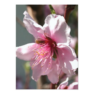 Close Up of Peach Tree Blossom 5.5x7.5 Paper Invitation Card
