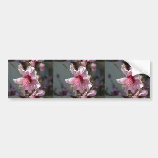Close Up of Peach Tree Blossom Bumper Sticker